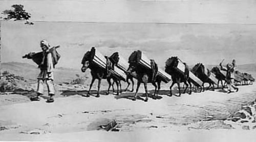 Ludwig-Kuba-Konji-sa-tovarima